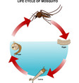 life cycle of mosquito vector image