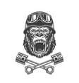 ferocious gorilla head in biker helmet vector image vector image