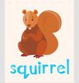 flashcard with word squirrel