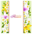 Beautiful flowers background vector image
