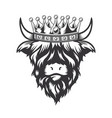 highland cow king with crown head design on white vector image