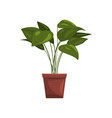 house plant in brown pot element for decoration vector image vector image