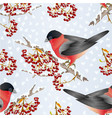 seamless texture bird bullfinch small songbirdon vector image vector image