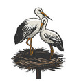 stork in nest animal sketch engraving vector image vector image