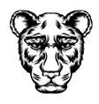tattoo leopard single head vector image