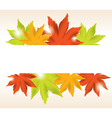 abstract background of maple leaves vector image