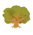 oak isolated large old tree huge bush vector image