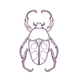 Outline Beetle Bug Insect Jumnos ruckeri vector image vector image
