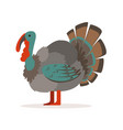turkey bird poultry farming vector image vector image