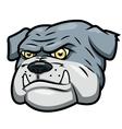 Angry bulldog vector image