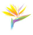 bird paradise flower vector image