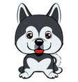 dog alaskan malamute breed sitting icon vector image