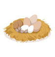 nest with eggs of different birds poultry vector image vector image