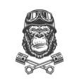 vintage monochrome serious gorilla head vector image vector image