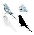 bird budgerigar blue pet parakeet vector image vector image