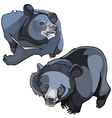 cartoon Himalayan black bears vector image vector image