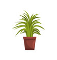 green decorative deciduous indoor house plant in vector image vector image