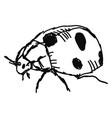 ladybug drawing on white background vector image vector image