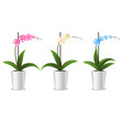 realistic detailed 3d potted tropical orchid set vector image vector image