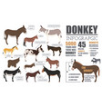 donkey breeds infographic template animal farming vector image