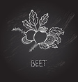 hand drawn beet vector image