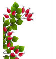 rose hip vector image