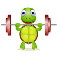 strong turtle vector image