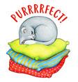 watercolor gray kitten sleeping on cushions vector image