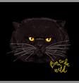 big grumpy face fat cat vector image vector image