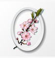 branch of pink sakura cherry flowers in frame vector image vector image
