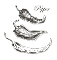 hand drawn chili pepper sketch set ink and vector image vector image