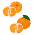 mandarines tangerine clementine with leaves vector image