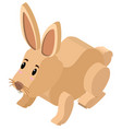 3d design for cute bunny vector image vector image