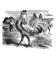 a cock on ground vintage line drawing or engraving vector image vector image