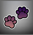animal tracks sign violet gradient icon vector image vector image