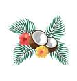 coconut fruit cartoon vector image vector image