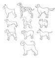 set of cartoon dog breeds vector image vector image