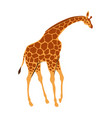 stylized of giraffe vector image