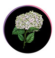 beautiful phlox flower in a black circle floral vector image