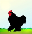 Cockerel silhouette on Morning sky vector image vector image