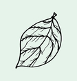 drawing of leaves vector image vector image