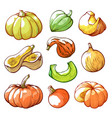 sliced and whole pumpkins hand drawn vector image