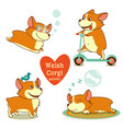 welsh corgi activity diving scooter bird sleep vector image vector image