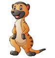 cute meerkat cartoon vector image vector image