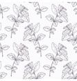 Hand drawn oregano branch outline seamless pattern vector image vector image