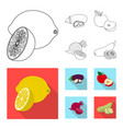 design of vegetable and fruit symbol vector image vector image