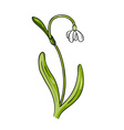 Simple flower isolated on the white