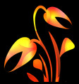 tulip in yellow and orange glare for a postcard vector image vector image