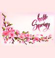 branch of sakura or cherry blossom vector image
