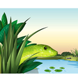 A snake at the pond vector image vector image